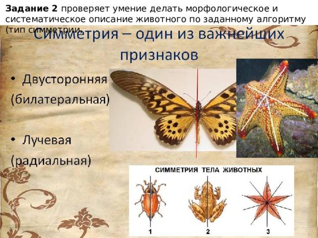 Задание 2 проверяет умение делать морфологическое и систематическое описание животного по заданному алгоритму (тип симметрии,