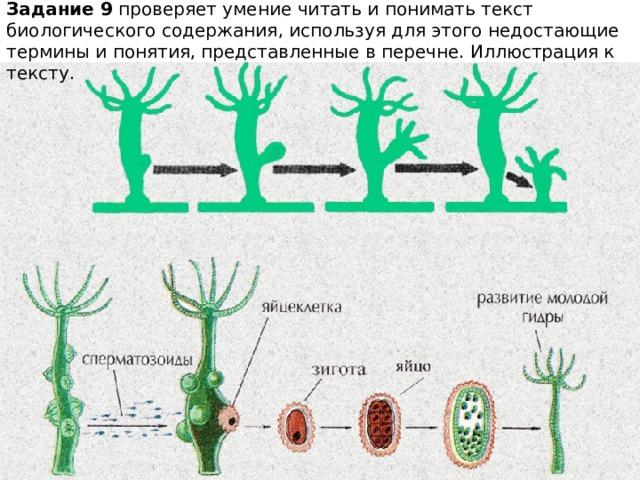 Задание 9 проверяет умение читать и понимать текст биологического содержания, используя для этого недостающие термины и понятия, представленные в перечне. Иллюстрация к тексту.