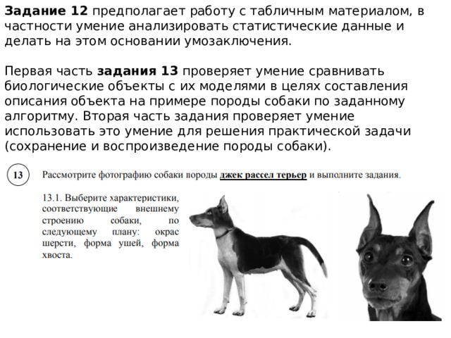 Задание 12 предполагает работу с табличным материалом, в частности умение анализировать статистические данные и делать на этом основании умозаключения. Первая часть задания 13 проверяет умение сравнивать биологические объекты с их моделями в целях составления описания объекта на примере породы собаки по заданному алгоритму. Вторая часть задания проверяет умение использовать это умение для решения практической задачи (сохранение и воспроизведение породы собаки).