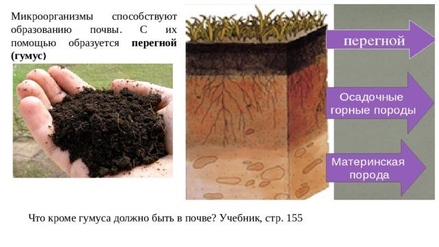 Микроорганизмы способствуют образованию почвы. С их помощью образуется перегной (гумус ) Что кроме гумуса должно быть в почве? Учебник, стр. 155