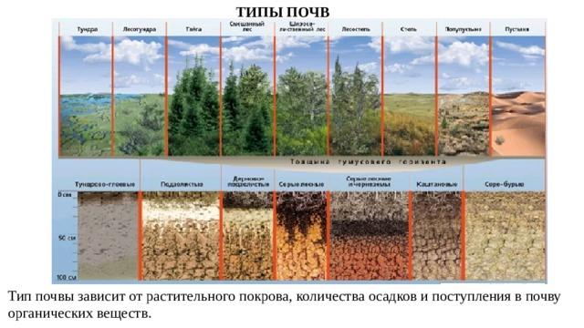 ТИПЫ ПОЧВ Тип почвы зависит от растительного покрова, количества осадков и поступления в почву органических веществ.