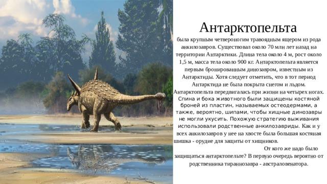 Антарктопельта   была крупным четвероногим травоядным ящером из рода анкилозавров. Существовал около 70 млн лет назад на территории Антарктики. Длина тела около 4 м, рост около 1,5 м, масса тела около 900 кг. Антарктопельта является первым бронированным динозавром, известным из Антарктиды. Хотя следует отметить, что в тот период Антарктида не была покрыта снегом и льдом. Антарктопельта передвигалась при жизни на четырех ногах. Спина и бока животного были защищены костяной броней из пластин, называемых остеодермами, а также, вероятно, шипами, чтобы хищные динозавры не могли укусить. Похожую стратегию выживания использовали родственные анкилозавриды. Как и у всех анкилозавров у нее на хвосте была большая костяная шишка - орудие для защиты от хищников. От кого же надо было защищаться антарктопельте? В первую очередь вероятно от родственника тираннозавра - австраловенатора.