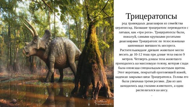 Трицератопсы    род травоядных динозавров из семейства цератопсид. Название трицератопс переводится с латыни, как «три рога». Трицератопсы были, пожалуй, самыми крупными рогатыми динозаврами Трицератопс по телосложению напоминал внешность носорога. Растительноядное древнее животное могло весить до 10-12 тонн при длине тела около 9 метров. Четверть длины тела животного приходилось на массивную голову, которая сзади была опоясана специальным костным щитом. Этот воротник, покрытый ороговевшей кожей, надежно закрывал шею Трицератопса. Голова его была увенчана тремя рогами. Два из них находились над глазами животного, а один располагался на носу.  .