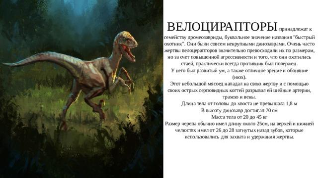 ВЕЛОЦИРАПТОРЫ принадлежат к семейству дромеозавриды, буквальное значение названия