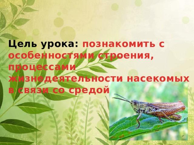 Цель урока: познакомить с особенностями строения, процессами жизнедеятельности насекомых в связи со средой их обитания.
