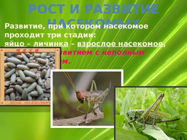 Рост и развитие насекомых Развитие, при котором насекомое проходит три стадии: яйцо – личинка – взрослое насекомое , называют развитием с неполным превращением .
