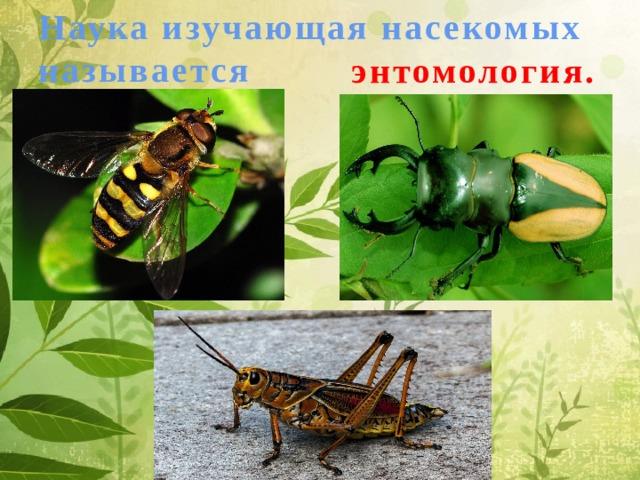 Наука изучающая насекомых   называется энтомология.