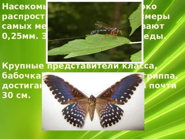 Насекомые необычайно широко распространены на суше. Размеры самых мелких насекомых бывают 0,25мм. Это наездники - яйцееды. Крупные представители класса, бабочка бразильская совка агриппа, достигают в размахе крыльев почти 30 см.