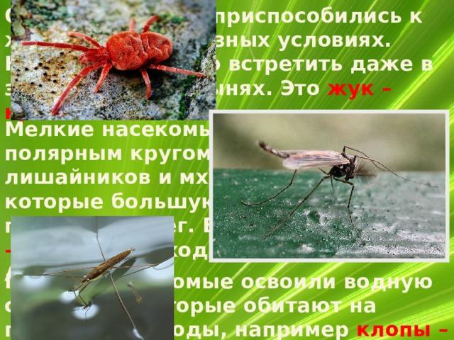 Отдельные виды приспособились к жизни в самых разных условиях. Насекомых можно встретить даже в засушливых пустынях. Это жук –  краснотелка.  Мелкие насекомые встречаются за полярным кругом – среди лишайников и мхов на голых скалах, которые большую часть года покрывает снег. Бескрылых комаров – дергунов находят на островах Антарктики. Многие насекомые освоили водную среду, а некоторые обитают на поверхности воды, например клопы – водомерки.