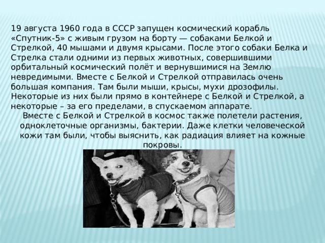 19 августа 1960 года в СССР запущен космический корабль «Спутник-5» с живым грузом на борту — собаками Белкой и Стрелкой, 40 мышами и двумя крысами. После этого собаки Белка и Стрелка стали одними из первых животных, совершившими орбитальный космический полёт и вернувшимися на Землю невредимыми. Вместе с Белкой и Стрелкой отправилась очень большая компания. Там были мыши, крысы, мухи дрозофилы. Некоторые из них были прямо в контейнере с Белкой и Стрелкой, а некоторые – за его пределами, в спускаемом аппарате. Вместе с Белкой и Стрелкой в космос также полетели растения, одноклеточные организмы, бактерии. Даже клетки человеческой кожи там были, чтобы выяснить, как радиация влияет на кожные покровы.