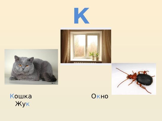 К К ошка О к но Жу к