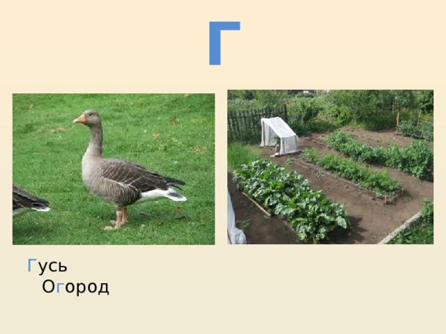 Г Г усь О г ород