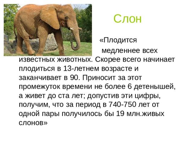 Слон  «Плодится  медленнее всех известных животных. Скорее всего начинает плодиться в 13-летнем возрасте и заканчивает в 90. Приносит за этот промежуток времени не более 6 детенышей, а живет до ста лет; допустив эти цифры, получим, что за период в 740-750 лет от одной пары получилось бы 19 млн.живых слонов»