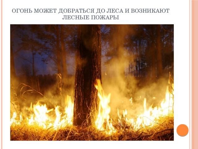 Огонь может добраться до леса и возникают лесные пожары