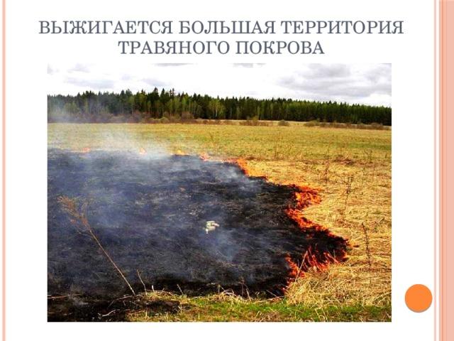 Выжигается большая территория травяного покрова