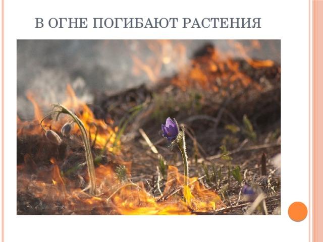 В огне погибают растения