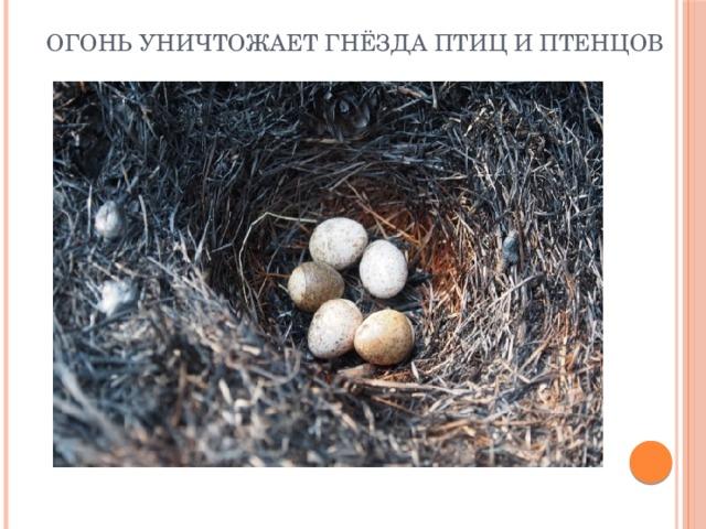Огонь уничтожает гнёзда птиц и птенцов