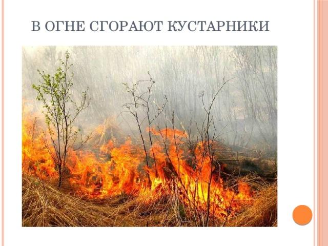 В огне сгорают кустарники
