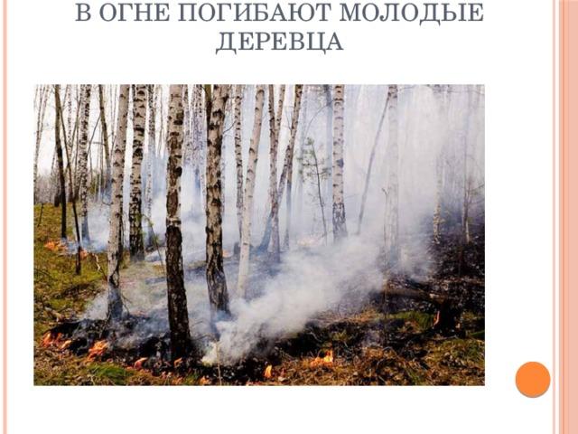 В огне погибают молодые деревца