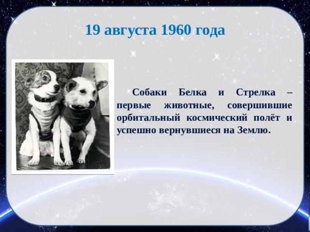 19 августа 1960 года  Собаки Белка и Стрелка – первые животные, совершившие орбитальный космический полёт и успешно вернувшиеся на Землю.