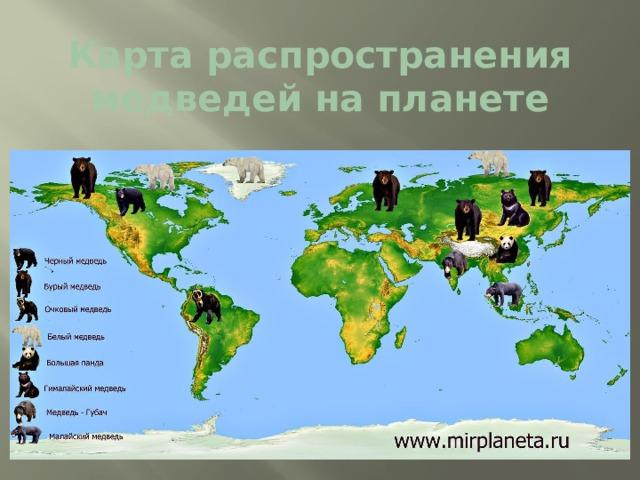 Карта распространения медведей на планете