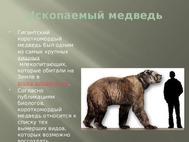 Ископаемый медведь