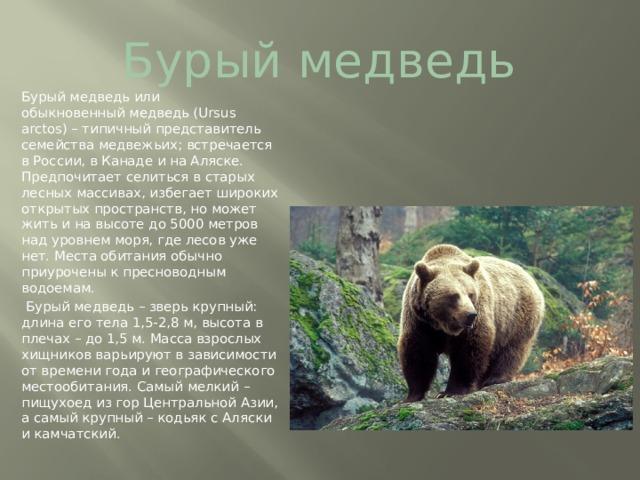 Бурый медведь Бурыймедведь или обыкновенныймедведь(Ursus arctos) – типичный представитель семейства медвежьих; встречается в России, в Канаде и на Аляске. Предпочитает селиться в старых лесных массивах, избегает широких открытых пространств, но может жить и на высоте до 5000 метров над уровнем моря, где лесов уже нет. Места обитания обычно приурочены к пресноводным водоемам.  Бурый медведь – зверь крупный: длина его тела 1,5-2,8 м, высота в плечах – до 1,5 м. Масса взрослых хищников варьируют в зависимости от времени года и географического местообитания. Самый мелкий – пищухоед из гор Центральной Азии, а самый крупный – кодьяк с Аляски и камчатский.