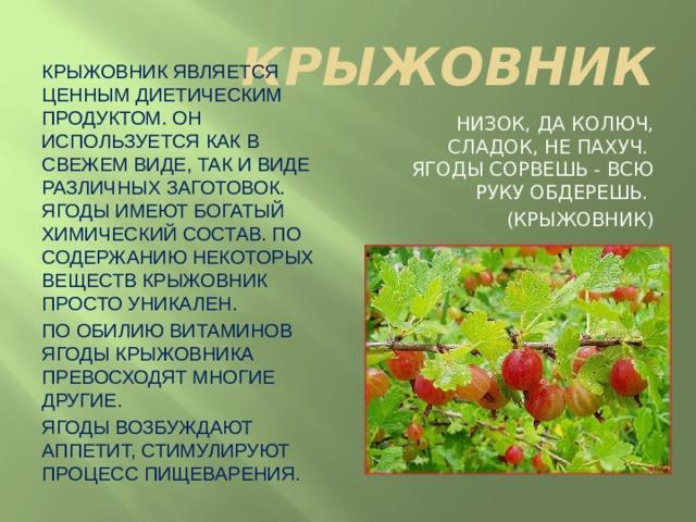КРЫЖОВНИК Крыжовник является ценным диетическим продуктом. Он используется как в свежем виде, так и виде различных заготовок. Ягоды имеют богатый химический состав. По содержанию некоторых веществ крыжовник просто уникален. По обилию витаминов ягоды крыжовника превосходят многие другие. Ягоды возбуждают аппетит, стимулируют процесс пищеварения. Низок, да колюч, сладок, не пахуч.  Ягоды сорвешь - всю руку обдерешь. (крыжовник)
