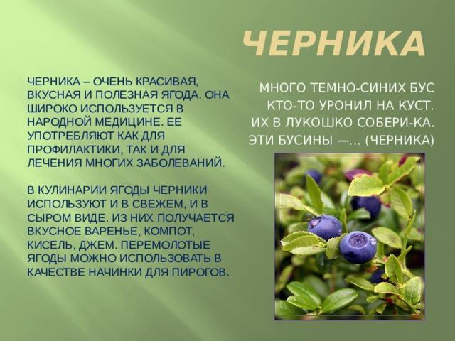 ЧЕРНИКА Черника – очень красивая, вкусная и полезная ягода. Она широко используется в народной медицине. Ее употребляют как для профилактики, так и для лечения многих заболеваний.   В кулинарии ягоды черники используют и в свежем, и в сыром виде. Из них получается вкусное варенье, компот, кисель, джем. Перемолотые ягоды можно использовать в качестве начинки для пирогов. Много темно-синих бус Кто-то уронил на куст. Их в лукошко собери-ка. Эти бусины —... (черника)