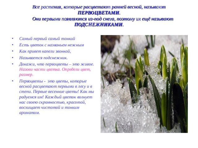 Все растения, которые расцветают ранней весной, называют ПЕРВОЦВЕТАМИ .   Они первыми появляются из-под снега, поэтому их ещё называют ПОДСНЕЖНИКАМИ .