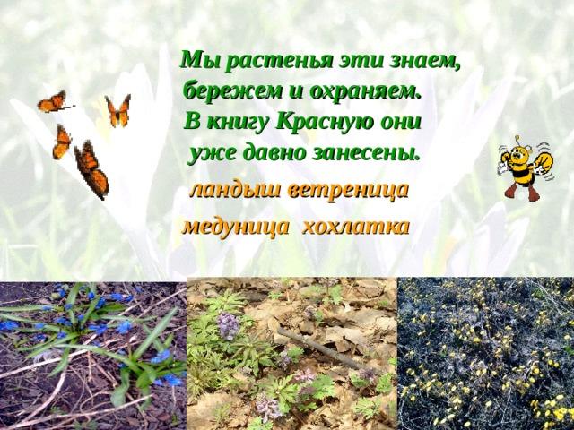 Мы растенья эти знаем,  бережем и охраняем.  В книгу Красную они  уже давно занесены. ландыш ветреница  медуница хохлатка