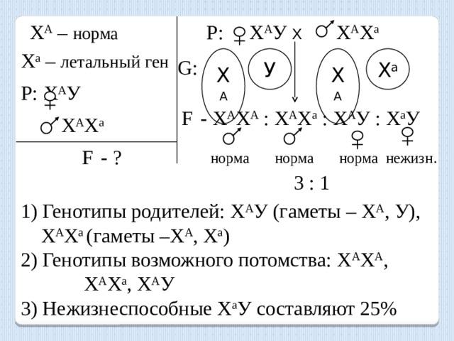 Х А – норма Р: Х А У Х  Х А Х а Х а – летальный ген Х А У Х А Х а G: Р:  Х А У F  - Х А Х А : Х А Х а : Х А У : Х а У  Х А Х а F  - ? норма норма норма нежизн. 3 : 1 1) Генотипы родителей: Х А У (гаметы – Х А , У),  Х А Х а (гаметы –Х А , Х а ) 2) Генотипы возможного потомства: Х А Х А , Х А Х а , Х А У 3) Нежизнеспособные Х а У составляют 25%