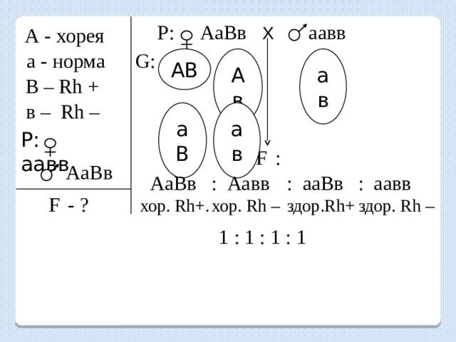 Р: АаВв Х   аавв А - хорея а - норма G: АВ ав Ав В – Rh + в – Rh – аВ ав P: аавв F  :  АаВв  АаВв : Аавв : ааВв : аавв хор. Rh+. хор. Rh – здор.Rh+ здор. Rh – F  - ? 1 : 1 : 1 : 1