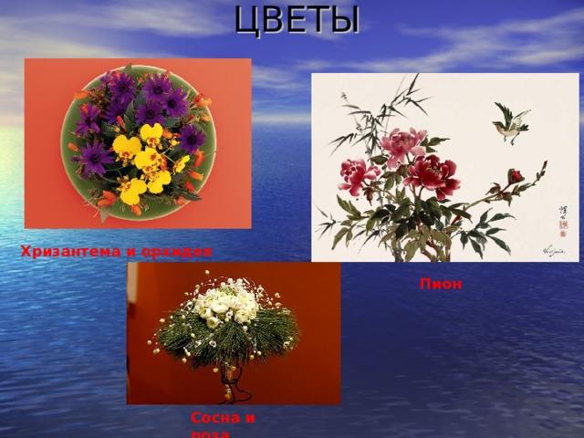 ЦВЕТЫ Хризантема и орхидея Пион Сосна и роза