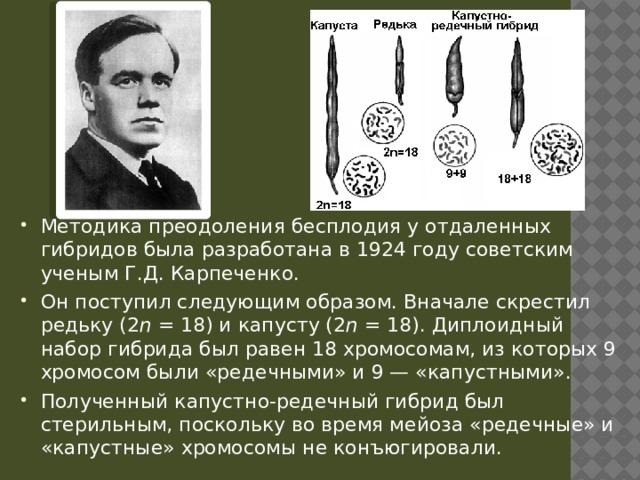 Методика преодоления бесплодия у отдаленных гибридов была разработана в 1924 году советским ученым Г.Д. Карпеченко. Он поступил следующим образом. Вначале скрестил редьку (2 n =18) и капусту (2 n =18). Диплоидный набор гибрида был равен 18 хромосомам, из которых 9 хромосом были «редечными» и 9 — «капустными». Полученный капустно-редечный гибрид был стерильным, поскольку во время мейоза «редечные» и «капустные» хромосомы не конъюгировали.