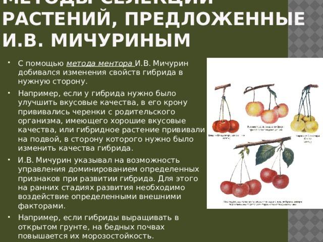 Методы селекции растений, предложенные И.В. Мичуриным