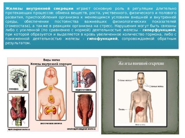 Железы внутренней секреции играют основную роль в регуляции длительно протекающих процессов: обмена веществ, роста, умственного, физического и полового развития, приспособления организма к меняющимся условиям внешней и внутренней среды, обеспечении постоянства важнейших физиологических показателей (гомеостаза), а также в реакциях организма на стресс. Нарушения могут быть связаны либо с усиленной (по сравнению с нормой) деятельностью железы - гиперфункцией , при которой образуется и выделяется в кровь увеличенное количество гормона, либо с пониженной деятельностью железы - гипофункцией , сопровождаемой обратным результатом.