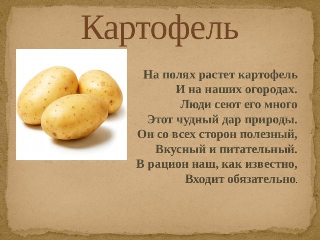 Картофель На полях растет картофель И на наших огородах.  Люди сеют его много  Этот чудный дар природы.  Он со всех сторон полезный,  Вкусный и питательный.  В рацион наш, как известно,  Входит обязательно .