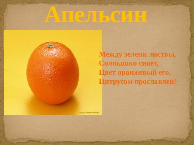 Апельсин Между зелени листвы, Солнышко сияет, Цвет оранжевый его, Цитрусом прославлен!