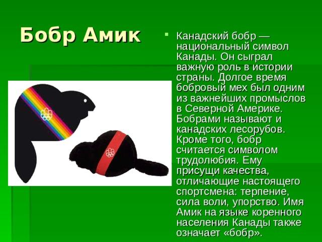 Бобр Амик