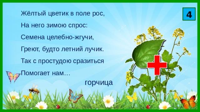 4 Жёлтый цветик в поле рос,  На него зимою спрос:  Семена целебно-жгучи,  Греют, будто летний лучик.  Так с простудою сразиться  Помогает нам… горчица
