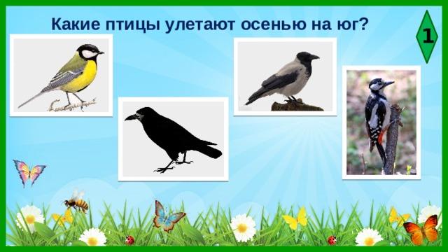 Какие птицы улетают осенью на юг? 1