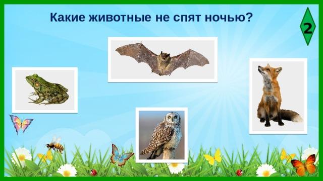 Какие животные не спят ночью? 2