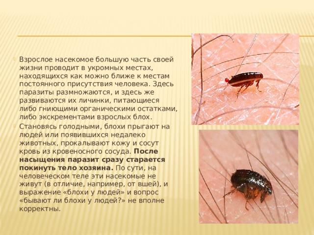 Взрослое насекомое большую часть своей жизни проводит в укромных местах, находящихся как можно ближе к местам постоянного присутствия человека. Здесь паразиты размножаются, и здесь же развиваются их личинки, питающиеся либо гниющими органическими остатками, либо экскрементами взрослых блох. Становясь голодными, блохи прыгают на людей или появившихся недалеко животных, прокалывают кожу и сосут кровь из кровеносного сосуда. После насыщения паразит сразу старается покинуть тело хозяина. По сути, на человеческом теле эти насекомые не живут (в отличие, например, от вшей), и выражение «блохи у людей» и вопрос «бывают ли блохи у людей?» не вполне корректны.