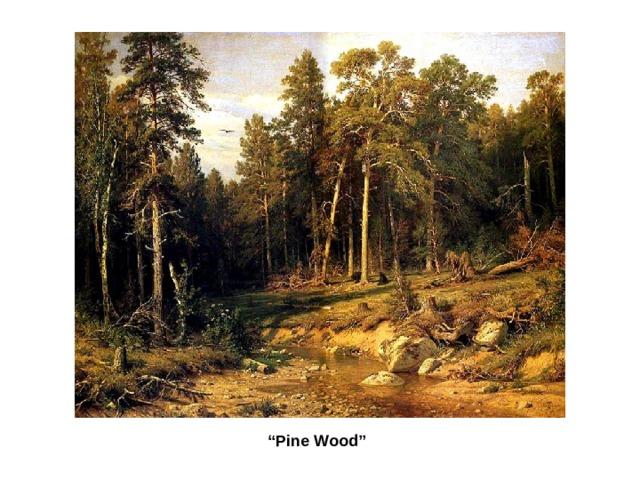 """ Pine Wood"""