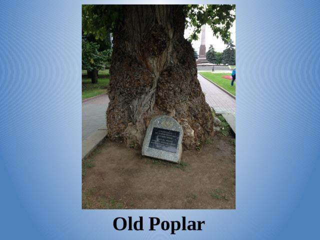 Old Poplar