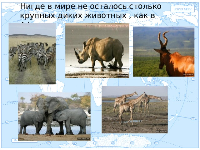 Нигде в мире не осталось столько крупных диких животных , как в Африке Евразия .
