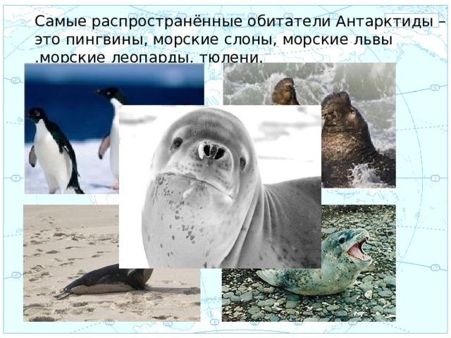 Самые распространённые обитатели Антарктиды – это пингвины, морские слоны, морские львы ,морские леопарды, тюлени. Евразия .