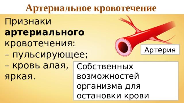 Артериальное кровотечение Признаки артериального кровотечения: – пульсирующее; – кровь алая,  яркая. Артерия Собственных возможностей организма для остановки крови недостаточно.