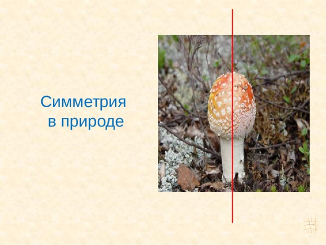 Симметрия в природе 9